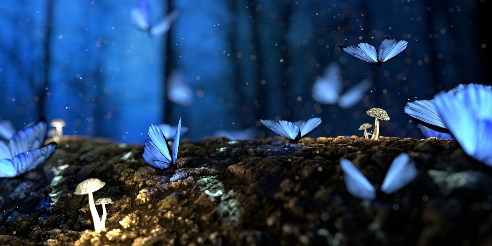 butterfly-2049567_1920 -Игорь Левченко de Pixabay
